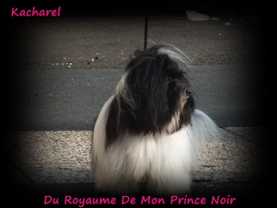 Kacharel 14 mois