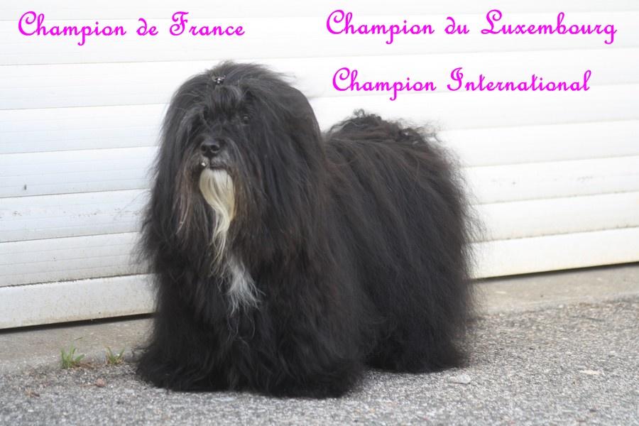Dior multi champion