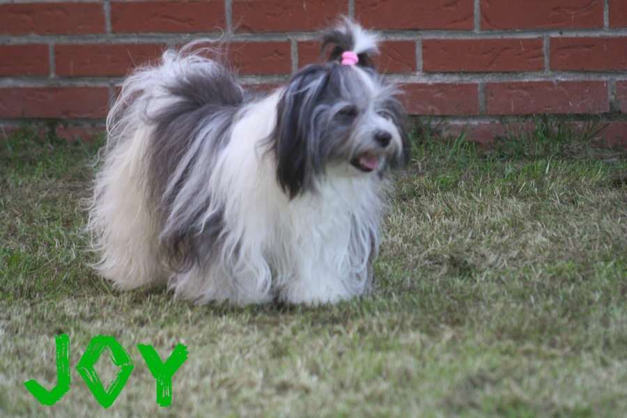 Joy dans la pelouse