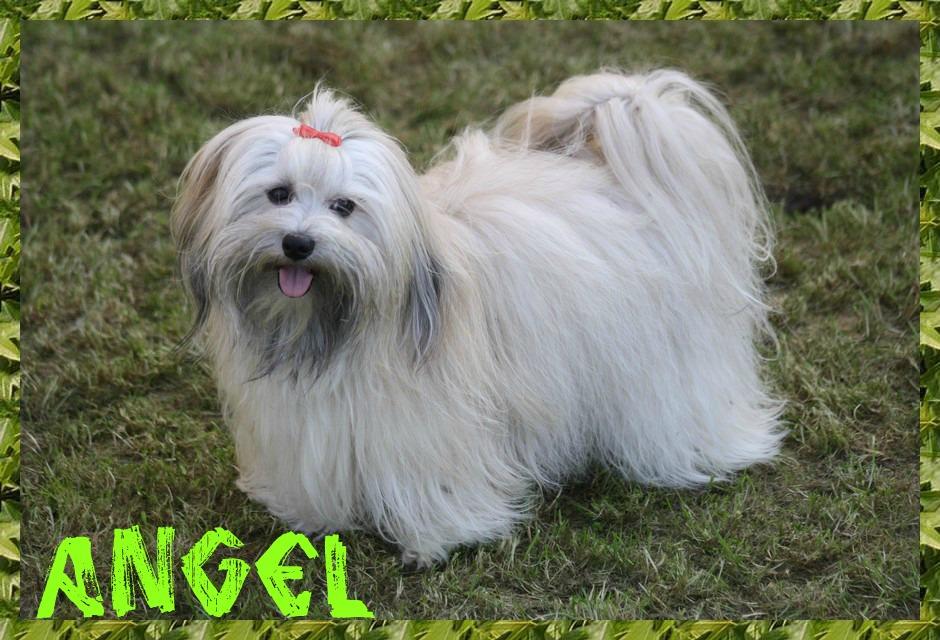 Angel dans la pelouse