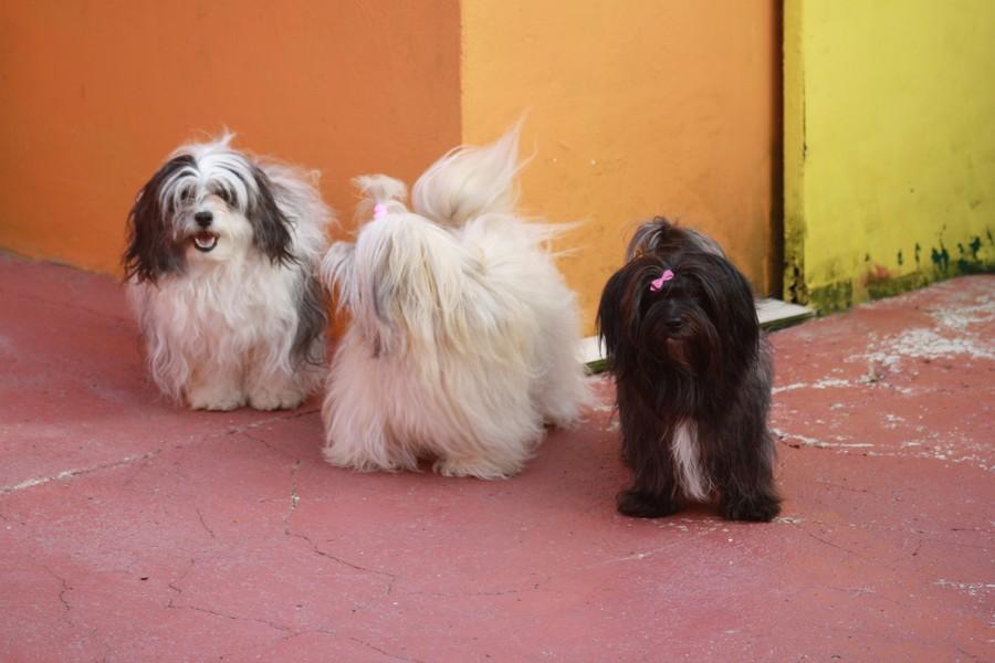 Joy, Angel et Jadore