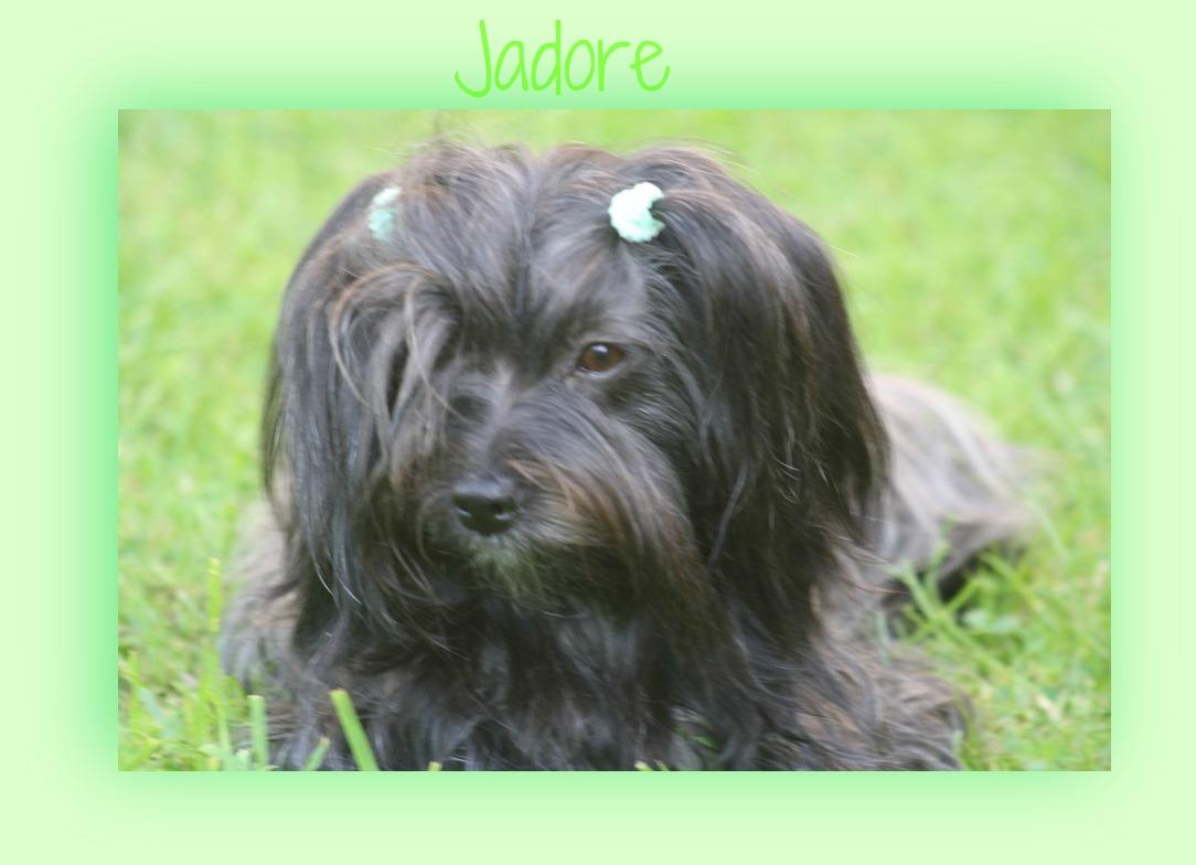 Jadore profite de l'herbe printemps 2012