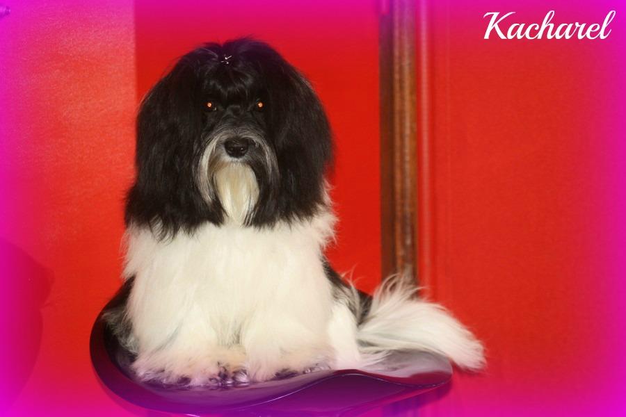 Kacharel 8 mois