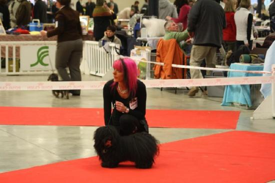 paris-dog-show.jpg