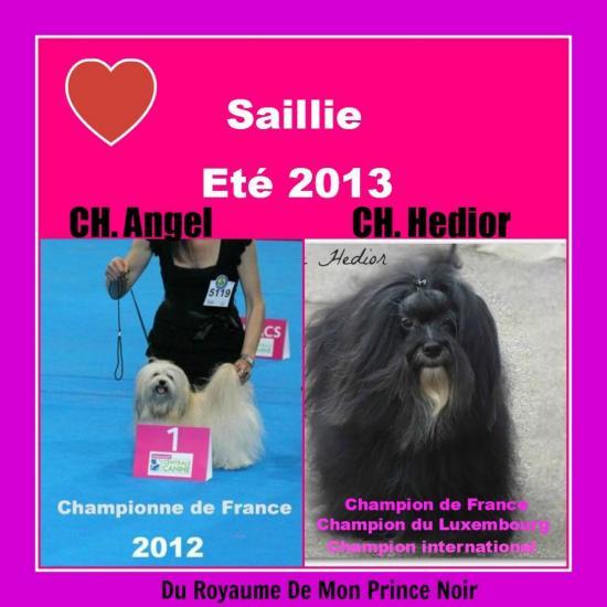 saillie-1.jpg